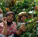 Sumatran Mandheling